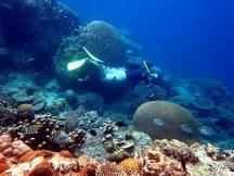 Free Diver tengah menikmati alam bawah laut Pulau Biawak.