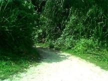 Jalan setapak menuju hutan.