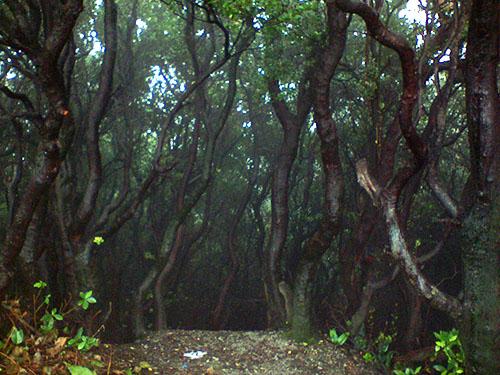 Rapatnya vegetasi di Tangkuban Parahu.