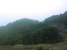Rindangnya pepohonan di kawasan Tangkuban Parahu.