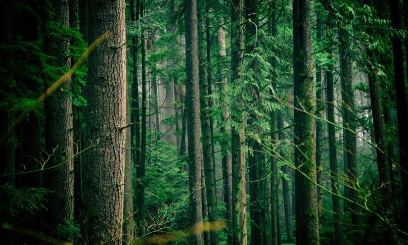 Menerobos Hutan Lindung UjungGenteng