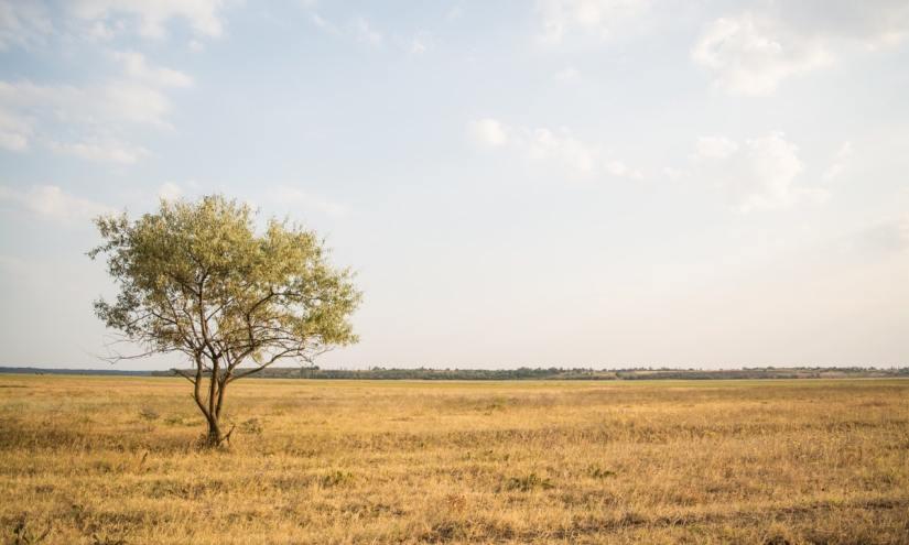 Seperti Pohon